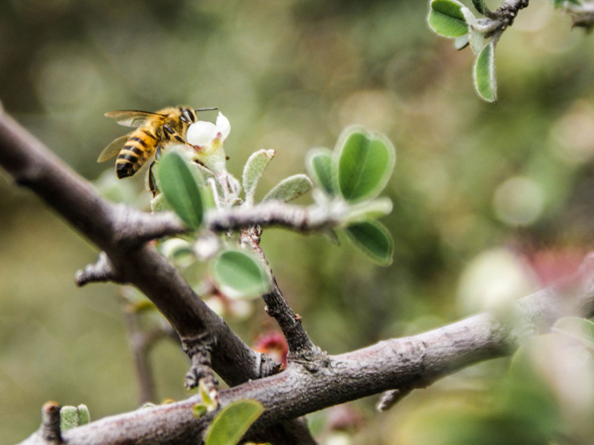 La pollinisation au moment de la floraison